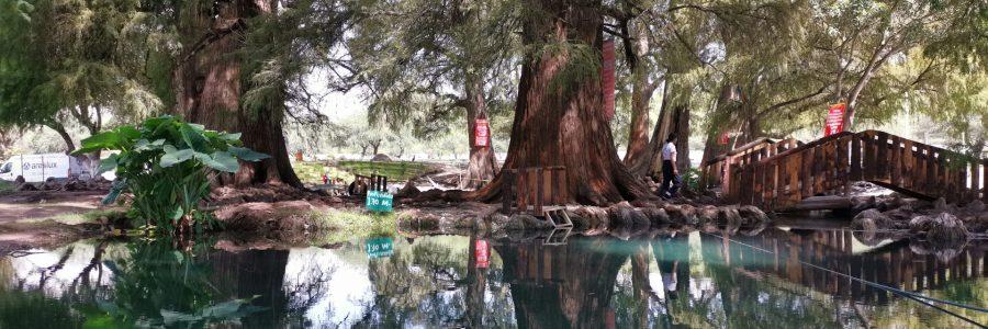 Como llegar a Los Ahuehuetes, uno de los secretos naturales más bellos de México.